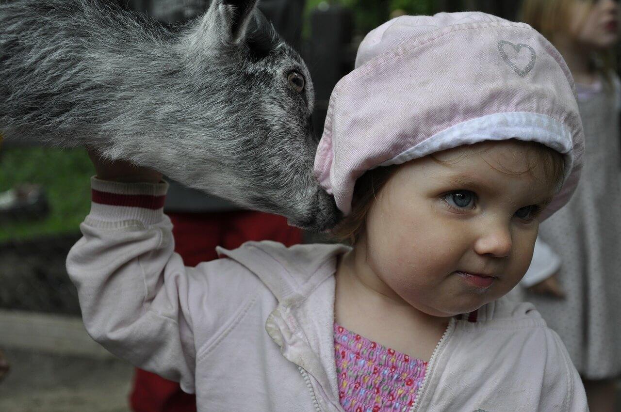 Контактный зоопарк: терапия и развлечение