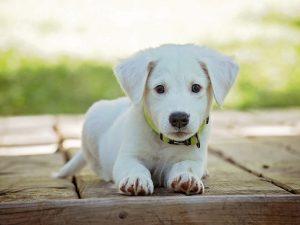 Сколько стоит завести собаку