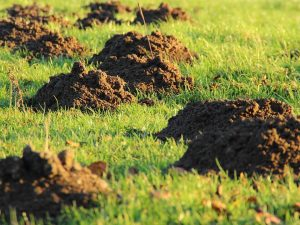 Деньги на ветер: инвестиции в землю утратили актуальность