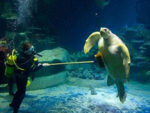 Необычная профессия: аквариумист — любитель подводного мира