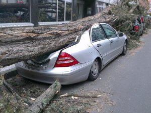 На машину упало дерево: кому выставлять счёт?